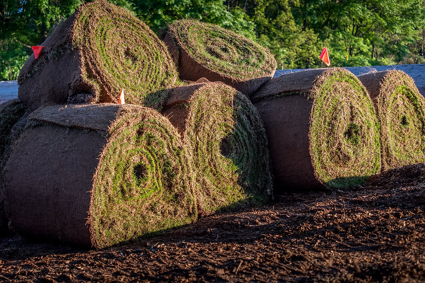 Rolls of fresh sod grass ready for comme