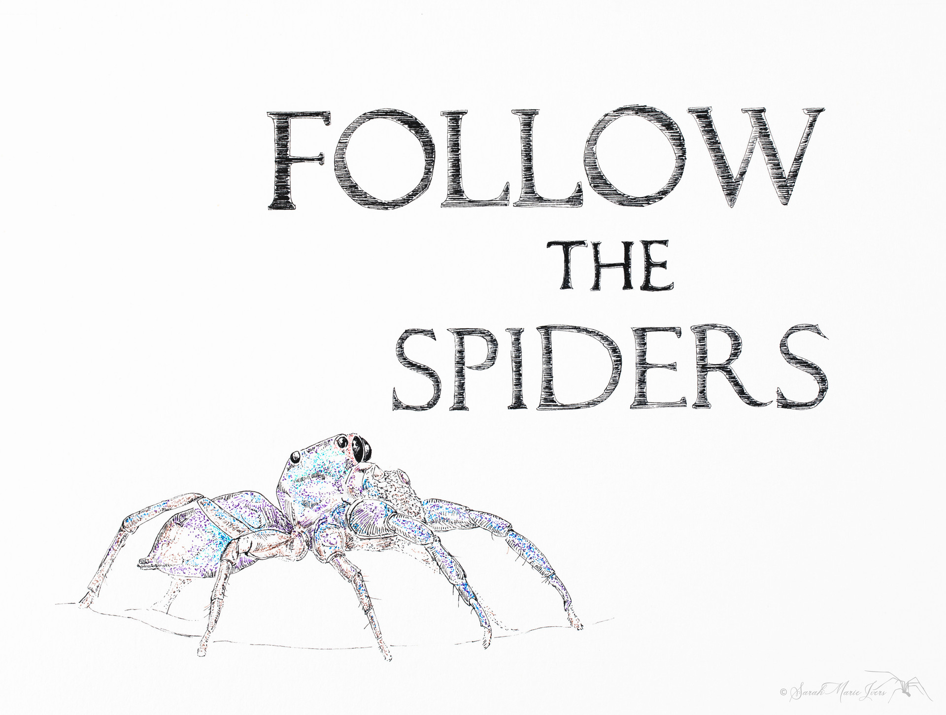 Follow the Spiders