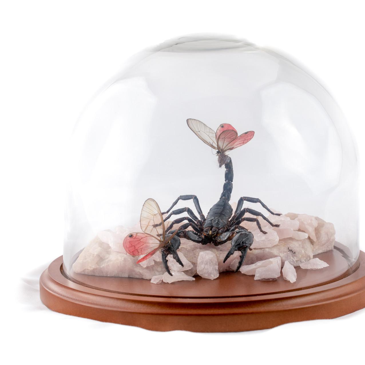 Forest Scorpion with Poseys, Rose Quartz