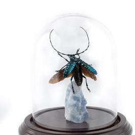Jade Cerambycidae in Flight
