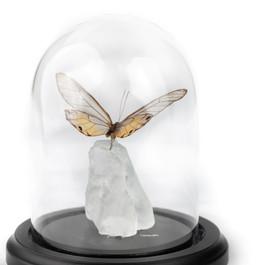Posey on Sea Glass