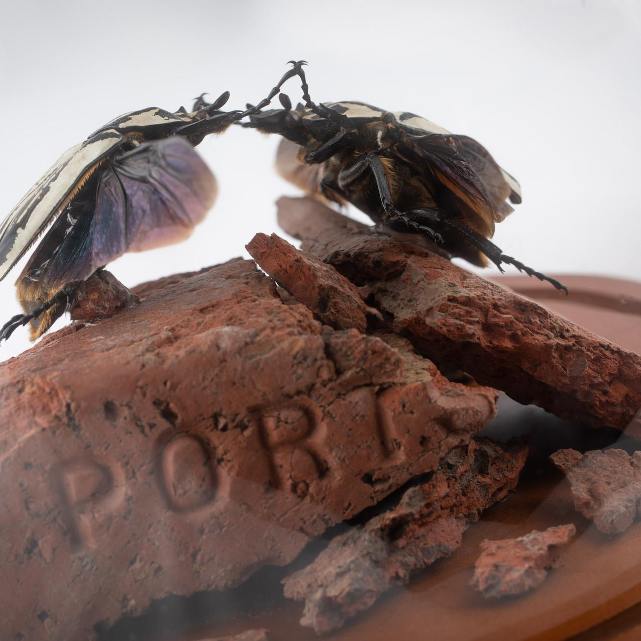 Scarab Combat on Paving Debris