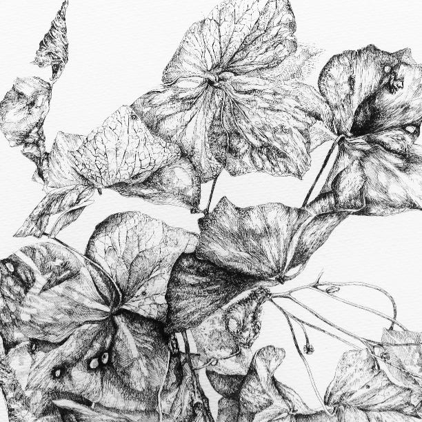 Hydrangea 2015 - detail