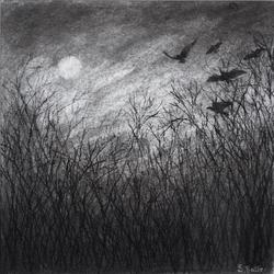 'Blackbird'