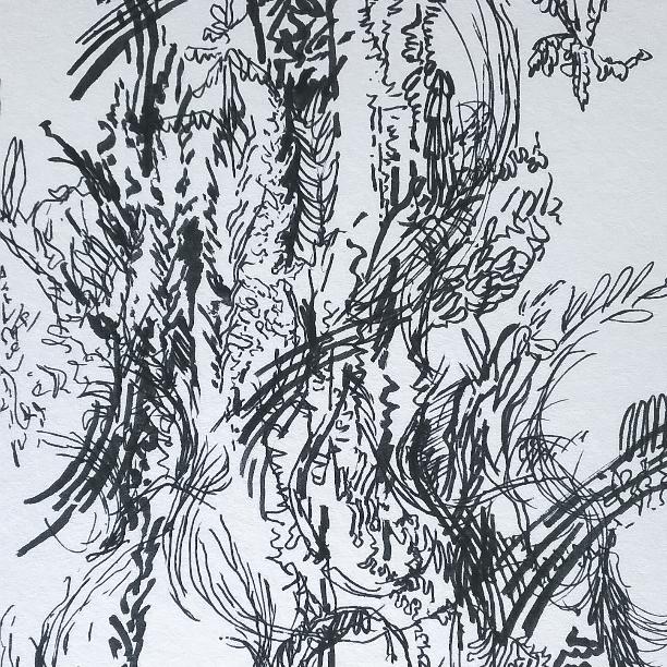 Cypress Tree (Detail)