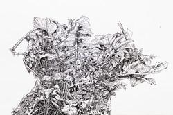 Foliage Study 2015