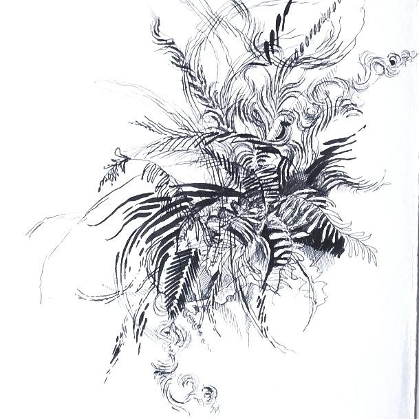 Fern patterns