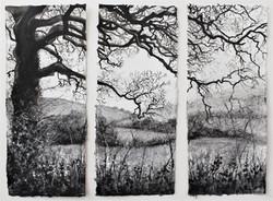 'Broad Oak'