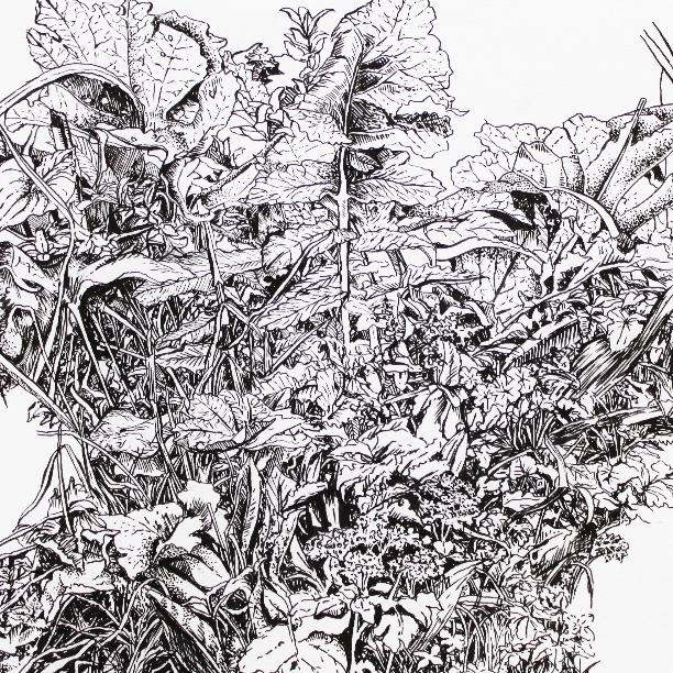 Foliage Study 2015 - detail
