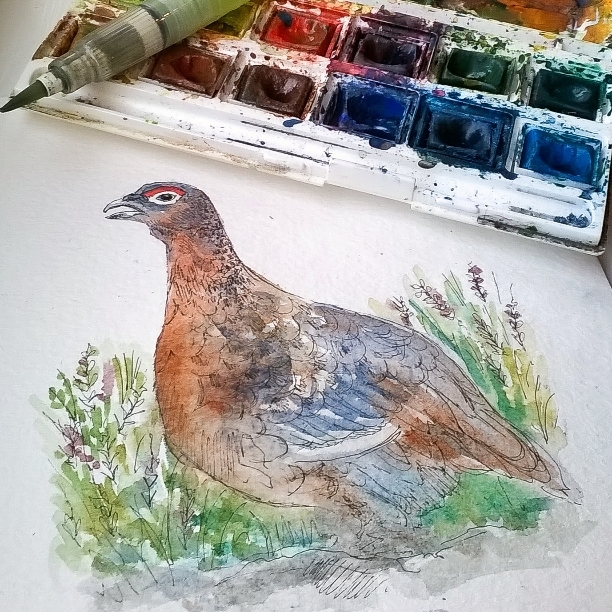 Red Grouse Card design