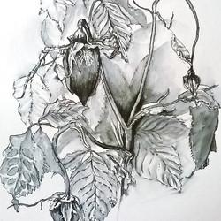 Roses study 2016