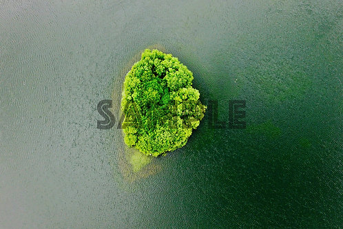 Broccoli Island