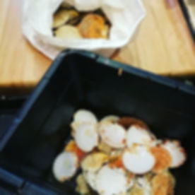 Fresh Cornish Scallops just fished in th
