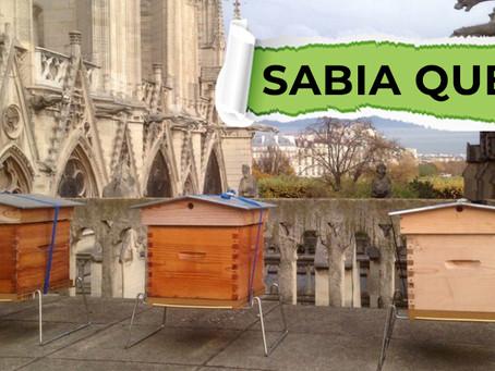 Sabia que as colmeias da Catedral de Notre-Dame são de origem portuguesa?