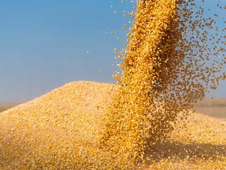 Importação de milho no Brasil deverá continuar para atender a demanda interna
