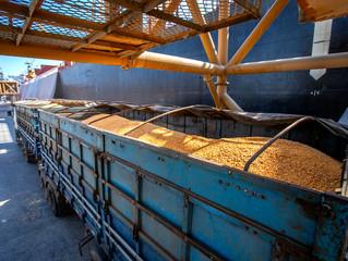 Fortesolo realiza operação de novo navio com milho importado da Argentina, no Porto de Paranaguá