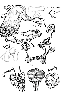 insect and fish heads sketches .png
