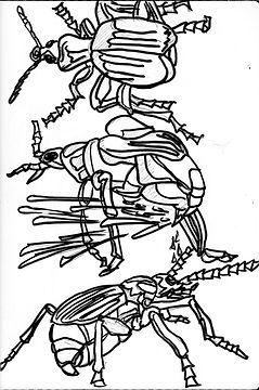 Bombardier beetle sketch