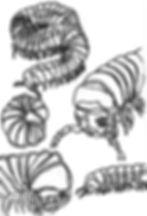 millipede sketch