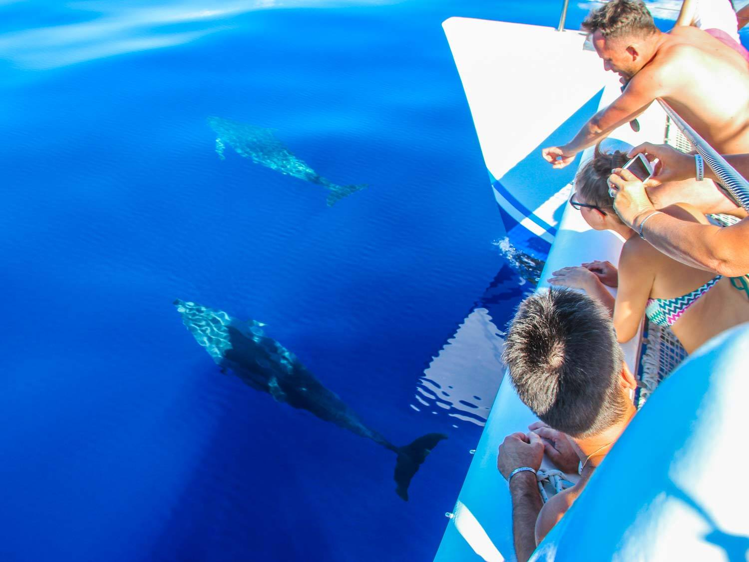 Dolphin Spotting Excusions In Kavos Corfu - Boat Trips And Cruises From Kavos