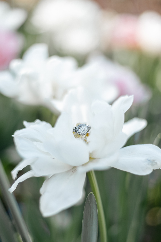 Engagement ring photo at Dallas garden engagement photoshoot