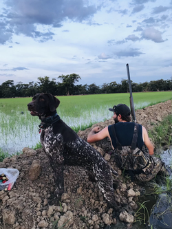 2020 NSW Rice Season