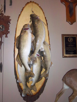 stringer walleye