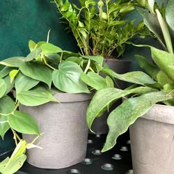 Juliet_Eidelman_Ceramics_peppa_planter