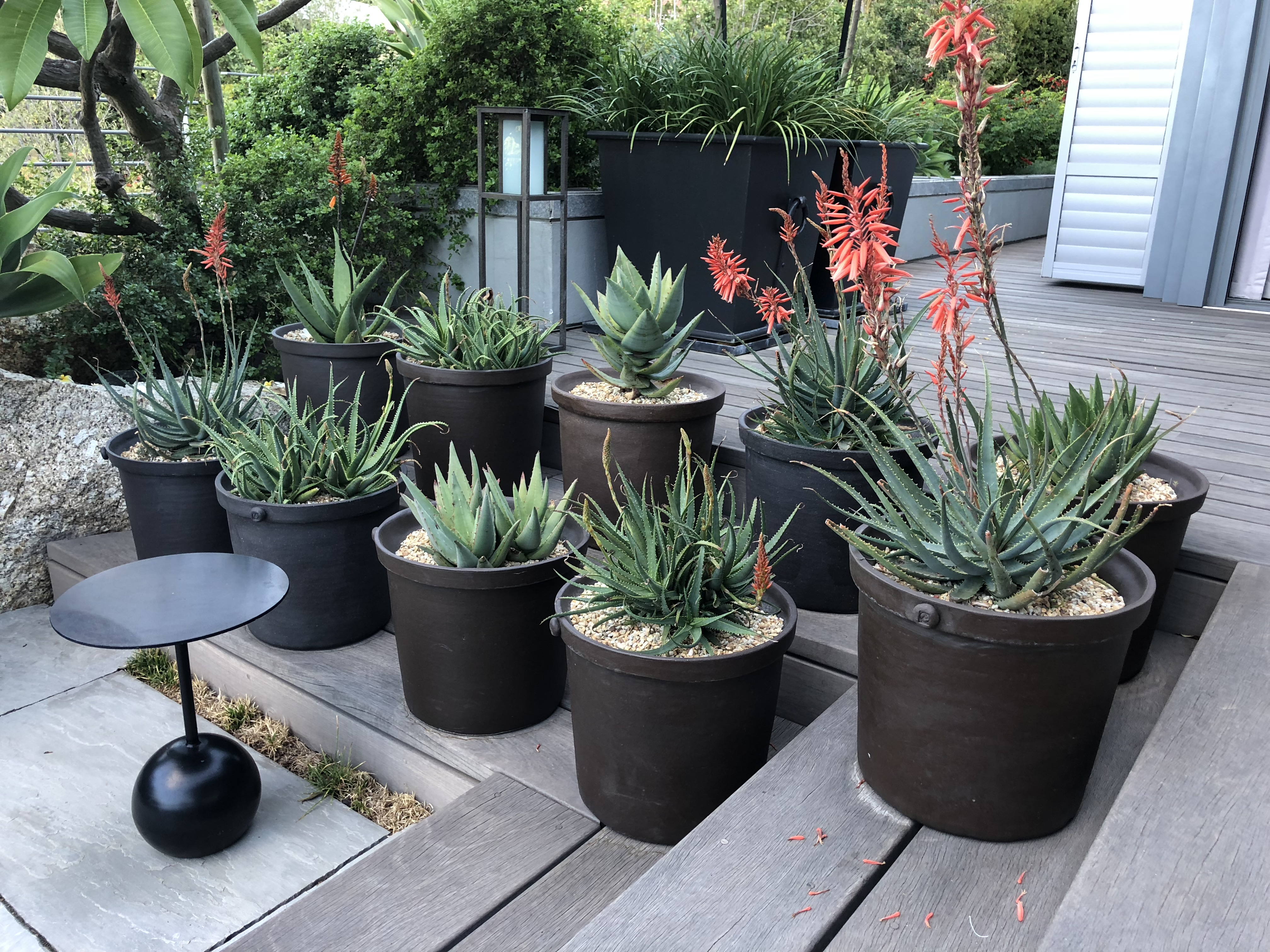 black planter pots