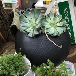 Juliet_Eidelman_Ceramics_wall_planter