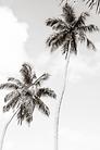 palm t.webp