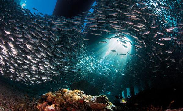 vida marina.jpg