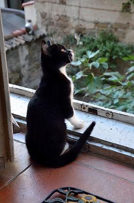 cat-pixabay.jpg