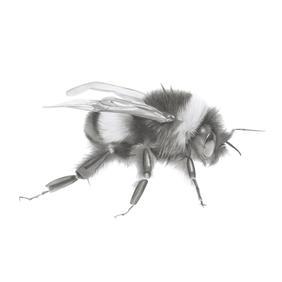 Left Bee