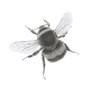 Middle Bee