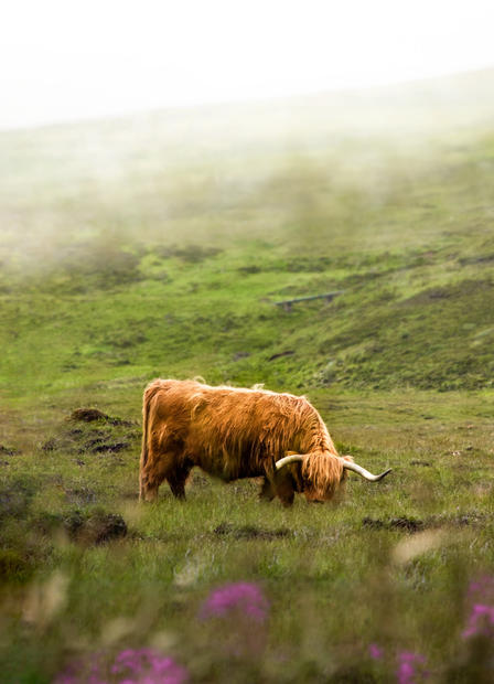Scottish Highland Leather
