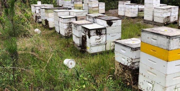 It Starts with Honey
