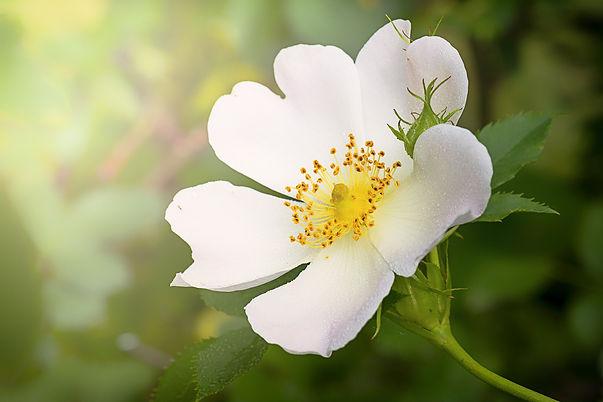 wild-flower-1330508_1920.jpg