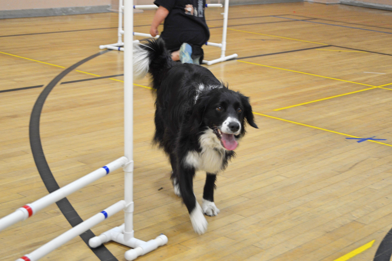 Dog Trot  2015
