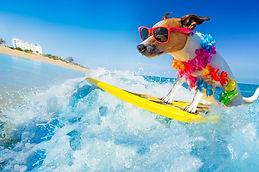 surfing dog.jpg