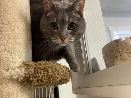 Pets of the Week August 20 - August 26