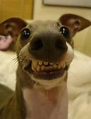 funny-dog-face.jpg