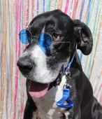 Ya gotta wear shades