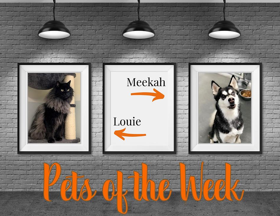 Pet of week.png