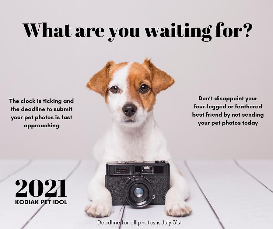 _pet idol post 2021.png