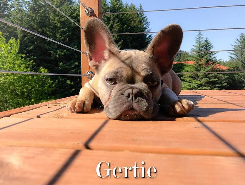 Gertie2017.jpg