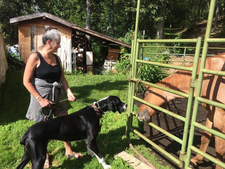 Max meets a horse!
