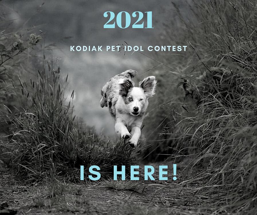fbPet Idol 2021 Announcement.png