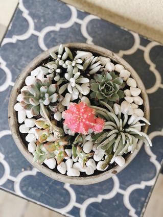 DIY Succulent Rock Garden