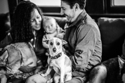 in home lifestyle session family pets dogs  newbaby newborn hospital birth birth photography baltimore maryland